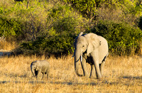 Cow Elephant and her Calf, Chobe National Park, Botswana