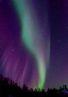 AuroraPurpleVerticalWebsite